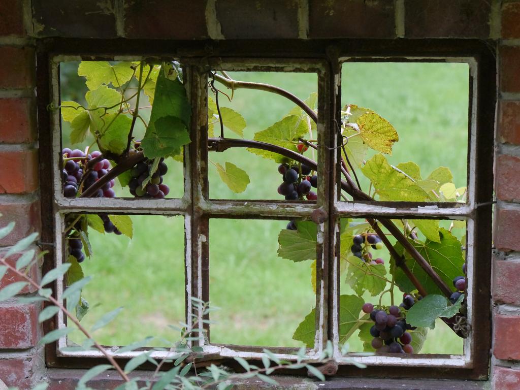 Mauerfenster im Moorjuwel Hedwig Weerts
