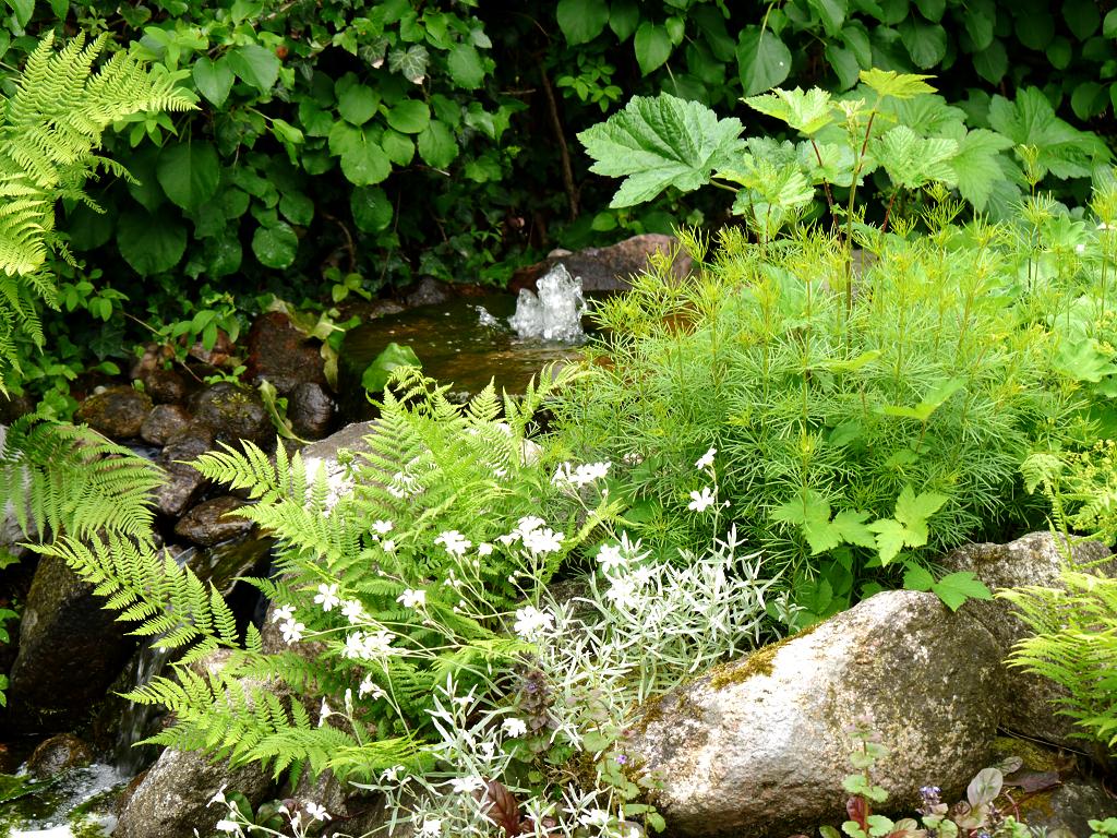 Die Teichquelle im Mai, Moorjuwel, Hedwig Weerts