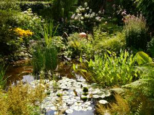 Teich in der Nachmittagssonne, Moorjuwel, Hedwig Weerts