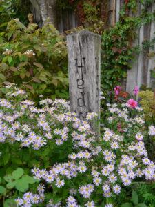 Holzpfosten zwischen Astern, Moorjuwel, Hedwig Weerts
