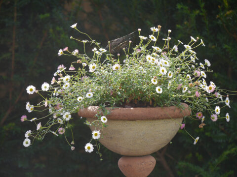 Garten Gertrud Lothwesen