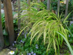 Glockenblumen und Gräser am kleinen Teich, Garten Irmgard Hantelmann