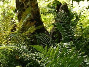 Waldgarten Amanda Peters in SpetzerTuun