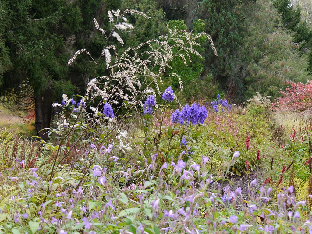 Pflanzung hinter der hellen Rabatte, Sichtungsgarten Weihenstephan