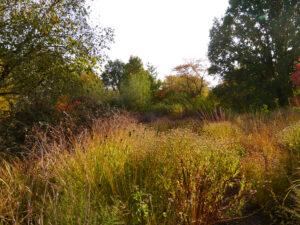 Wildblumen-Wiese Sichtungsgarten Weihenstephan