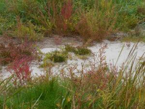Salzwiesen am Strand von Harlesiel