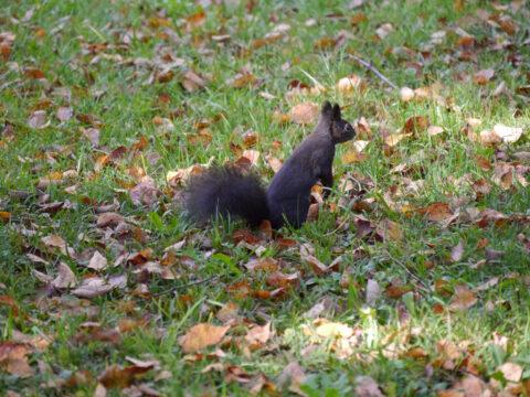Eichhörnchen in Wurzerls Garten