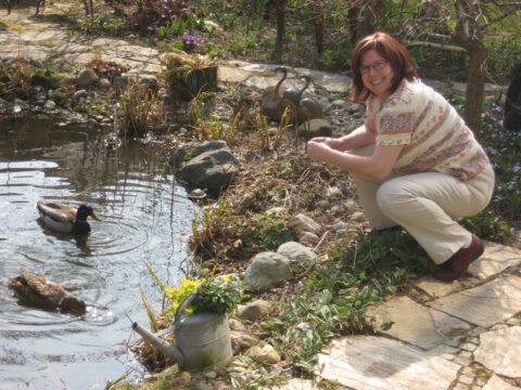 Wildenten-Paar in Wurzerls Garten