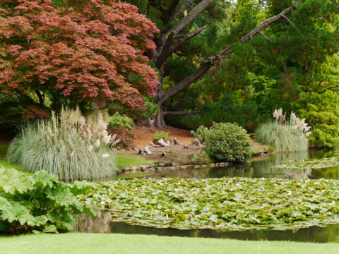 Sheffield Park and Garden, East-Sussex