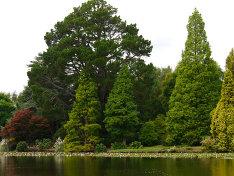 Sheffield Park and Garden East Sussex