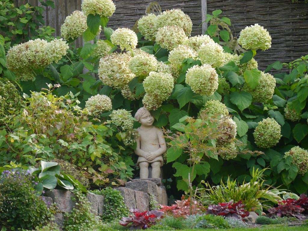 Mädchen unter Hydrangea 'Annabelle', Künstlergarten Gertrud Lothwesen.