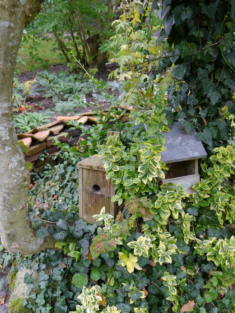 Nistmöglichkeiten im Schattengarten, Landidyll-Tjarks, Friedeburg