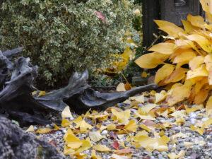 Im Vorgarten von Wurzerls Garten