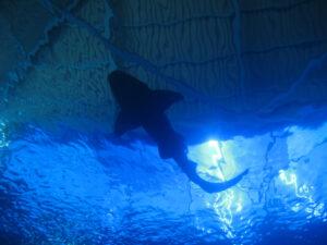 Hai im Nationalen Aquarium, Santo Domingo