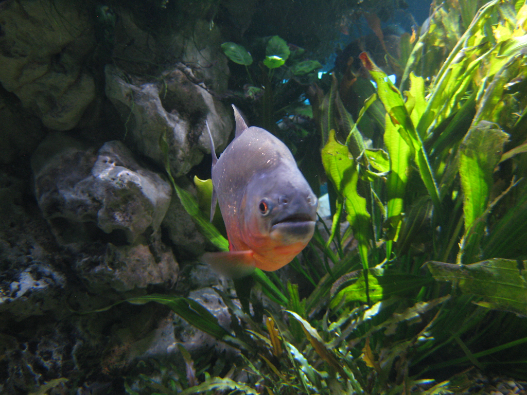 Das nationale Aquarium von Santo Domingo