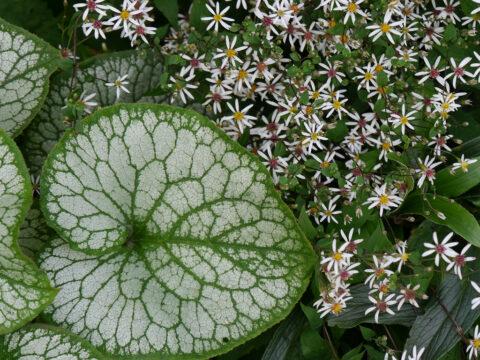 Schatten- und trockenheitsverträgliche Pflanzen