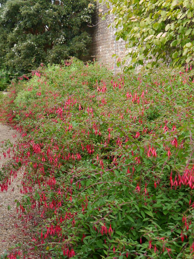 Fuchsienbeet Mauergarten, Wakehurst, West Sussex
