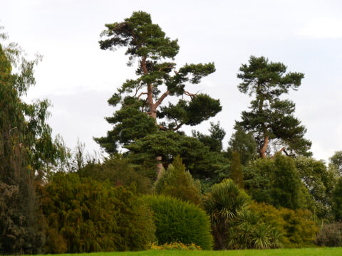 Pinetum, Wakehurst West-Sussex