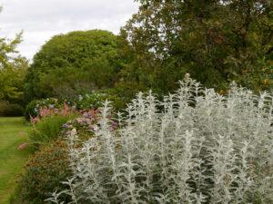 'Southern Hemisphere Garden', Wakehurst, West Sussex