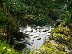 Vorgarten Spetzer-Tuun, Waldgarten Amanda Peters