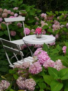 Hydrangea 'Endless Summer', Spetzer Tuun, Waldgarten Amanda Peters