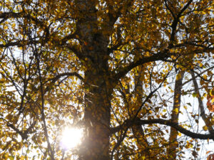 Birken in Wurzerlsgarten