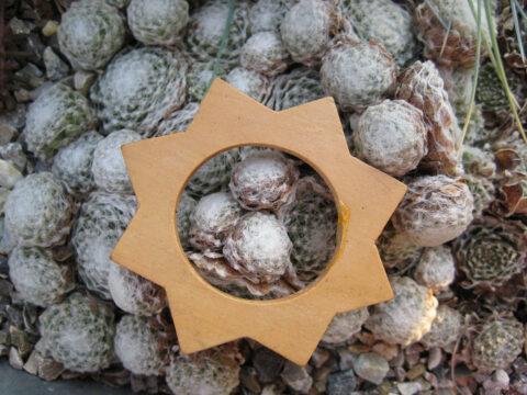 Sempervivum in Wurzerls weihnachtlichem Garten