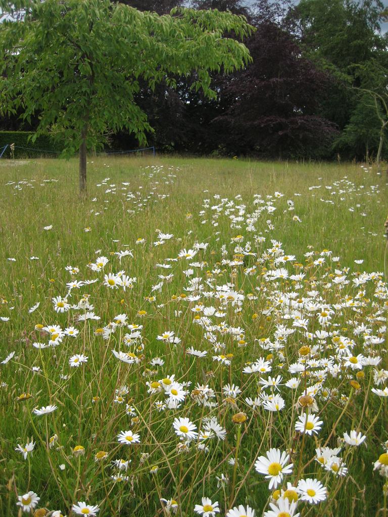 Lakeside Meadow, Landschaftspark Packwood House