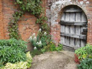 Centranthus ruber 'Albus', alter Ausgang Packwood House