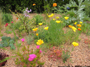 Sandbeet im Sunken Garden, Packwood House
