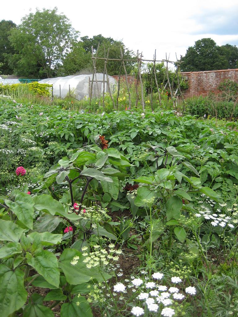 Kitchen Garden, Küchengarten, Packwood House