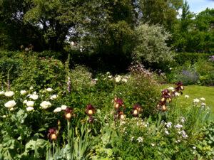 Paeonia 'Jan van Leeuwen' und Iris barbata 'Provencal', Junigarten Moorriem