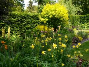 Aquilegia chrysantha, Spätsommergarten, Garten Moorriem