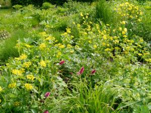 Uferpflanzen am Wassergraben im Garten Moorriem