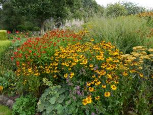 Helenium, Achillea, Wiesengarten, Garten Moorriem
