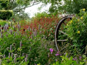 Wagenrad im Wiesengarten August, Garten Moorriem