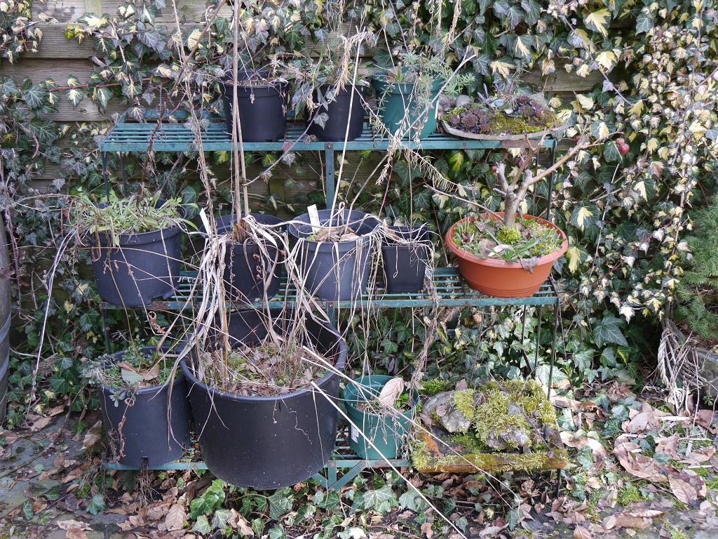 Die Töpfe haben den Winter gut überstanden in Wurzerlsgarten