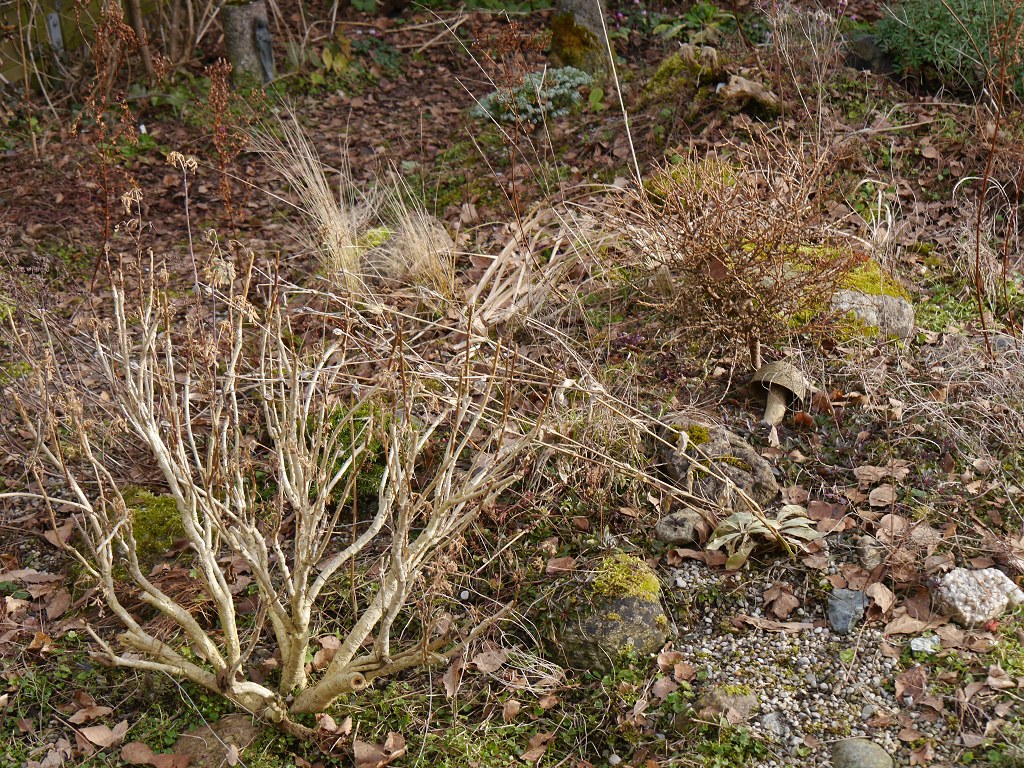 Laub entfernen und altes und zu große Polster entfernen ist jetzt in Wurzerlsgarten angesagt.