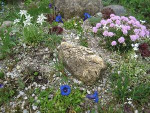Im Mai soll der Steingarten dann wieder so aussehen