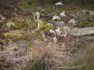 Gras am Teichrand in Wurzerls Garten