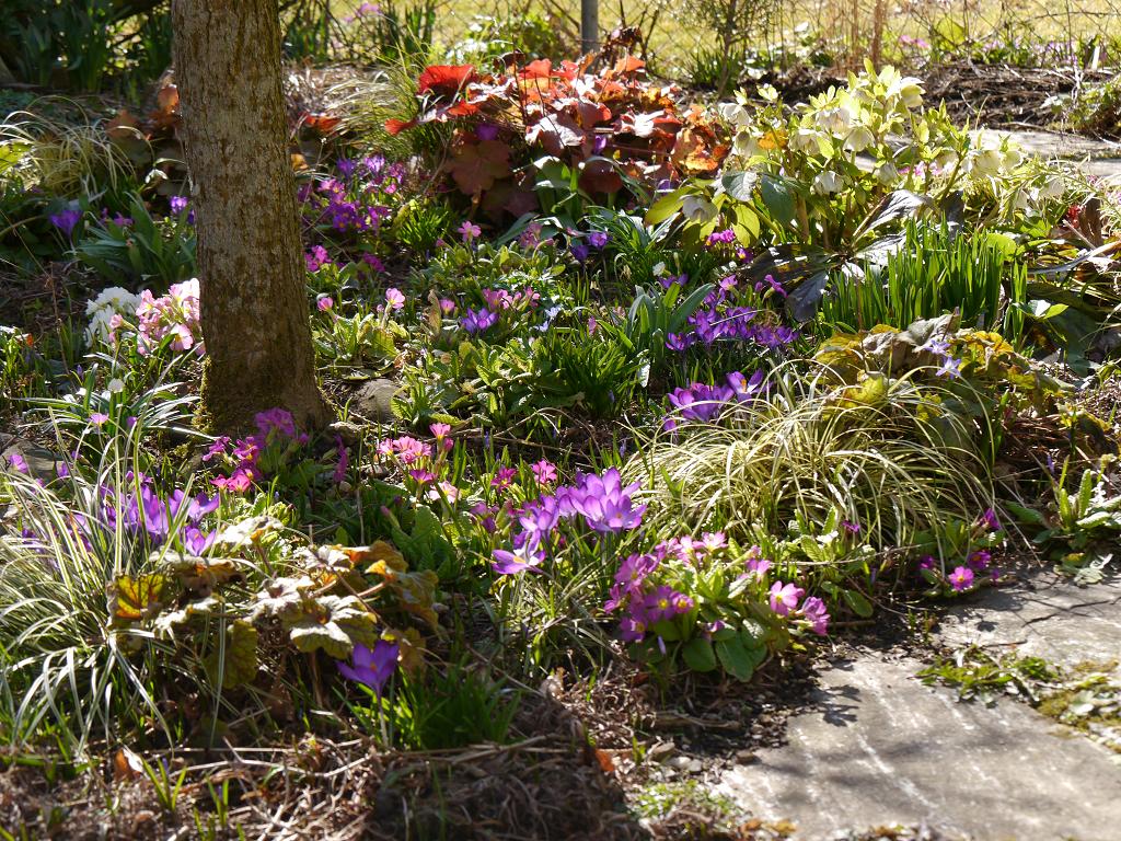 Frühlingsbeet in Wurzerls Garten 11.2.2019