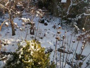 Frühlingsbeet in Wurzerls Garten 11.2.2021