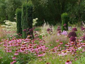 Präriebeet im Wiesengarten Moorriem