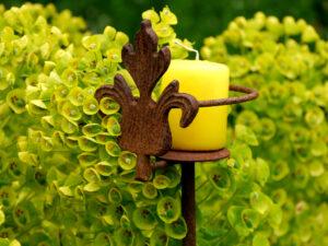 Euphorbia characias, Garten Erna de Wolff