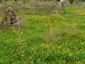 Blumenwiese Ende August mit Hornklee (Lotus corniculatus) im Hortus Insectorum, Markus Gastl
