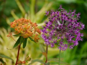 Temperamentvolle Farben  im Schaugarten der Staudengärtnerei Extragrün