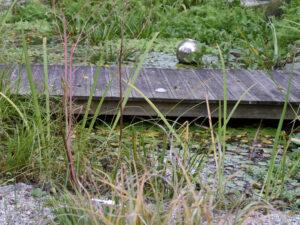 Steg über den Teich im Schaugarten der Staudengärtnerei Extragrün