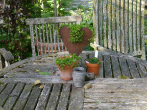 In der Rosenpergola im Schaugarten der Staudengärtnerei Extragrün