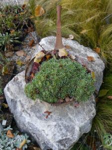 Sukkulenten im Topf,  im Schaugarten der Staudengärtnerei Extragrün