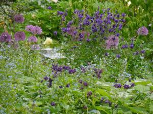 Akeleien, Allium und Brunnera  im Schaugarten der Staudengärtnerei Extragrün